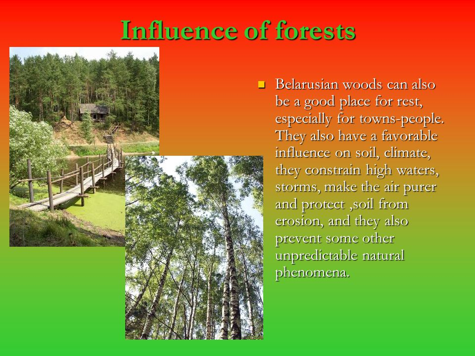 Influence of forests Belarusian woods can also be a good place for rest, especially for towns-people. They also have a favorable influence on soil, cl