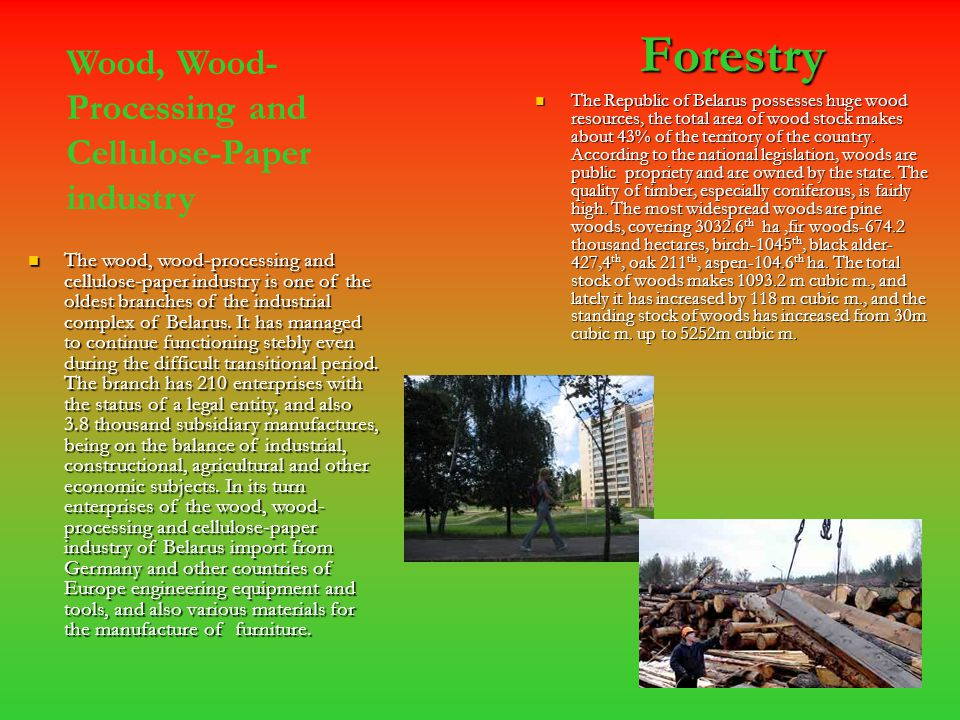 Forestry Forestry The Republic of Belarus possesses huge wood resources, the total area of wood stock makes about 43% of the territory of the country.