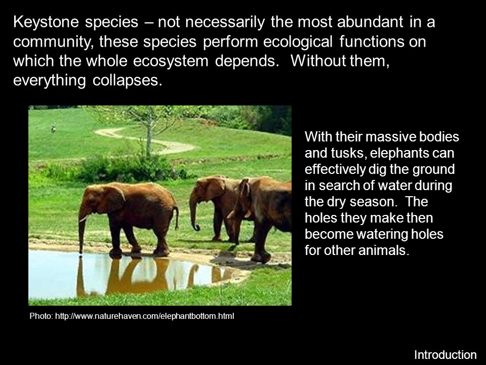 Keystone species – not necessarily the most abundant in a community, these species perform ecological functions on which the whole ecosystem depends.