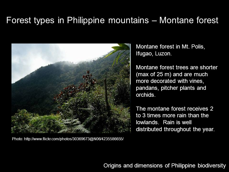 Forest types in Philippine mountains – Montane forest Photo: http://www.flickr.com/photos/30369673@N06/4235586655/ Montane forest in Mt. Polis, Ifugao