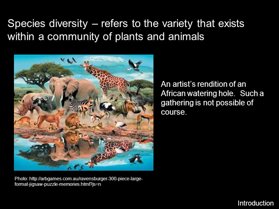 Species diversity – refers to the variety that exists within a community of plants and animals Introduction An artists rendition of an African waterin
