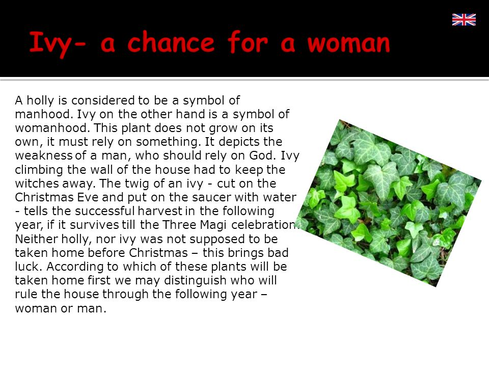 A holly is considered to be a symbol of manhood. Ivy on the other hand is a symbol of womanhood.