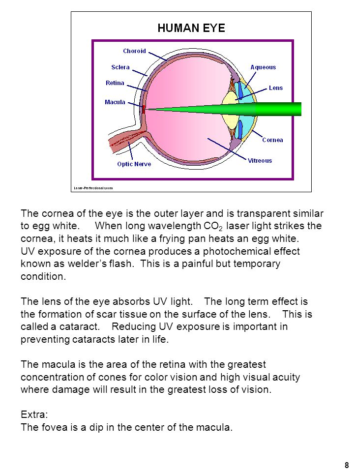 8 The cornea of the eye is the outer layer and is transparent similar to egg white. When long wavelength CO 2 laser light strikes the cornea, it heats