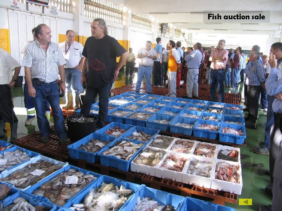 Fish auction sale