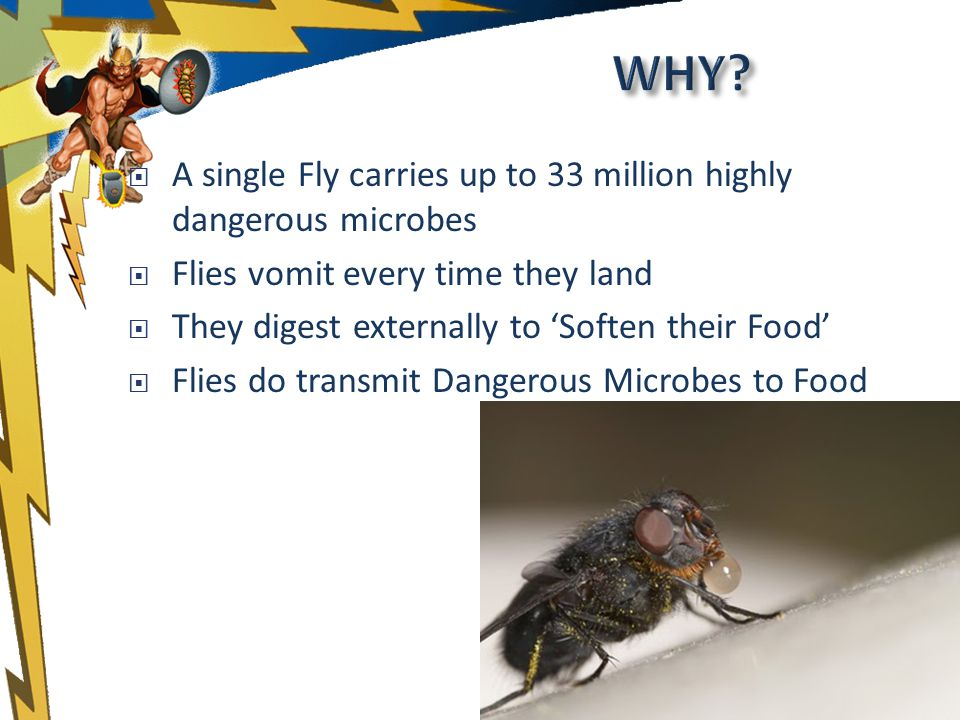 A single Fly carries up to 33 million highly dangerous microbes Flies vomit every time they land They digest externally to Soften their Food Flies do transmit Dangerous Microbes to Food