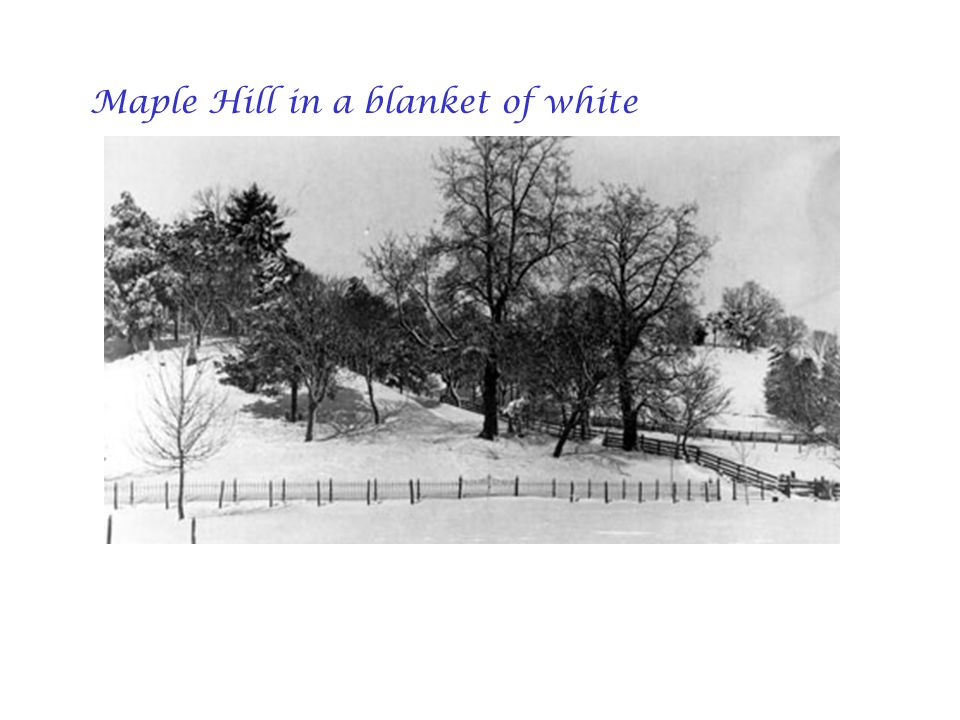 Maple Hill in a blanket of white