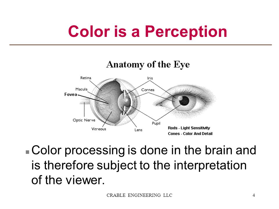 n Color processing is done in the brain and is therefore subject to the interpretation of the viewer. Color is a Perception 4CRABLE ENGINEERING LLC
