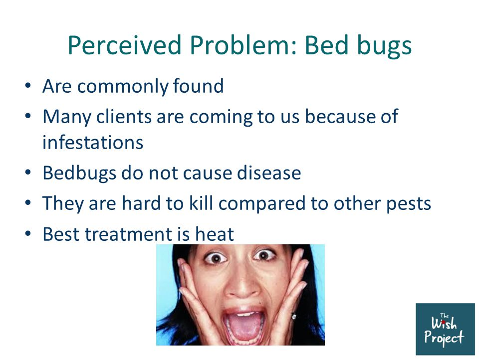 Real Problem: The poor have high rates of illness, asthma and allergies Dust mites cause allergic reactions Cockroaches get inside appliances and small crevices Lice are pervasive Mice, and spiders and other bugs cause disease directly or indirectly