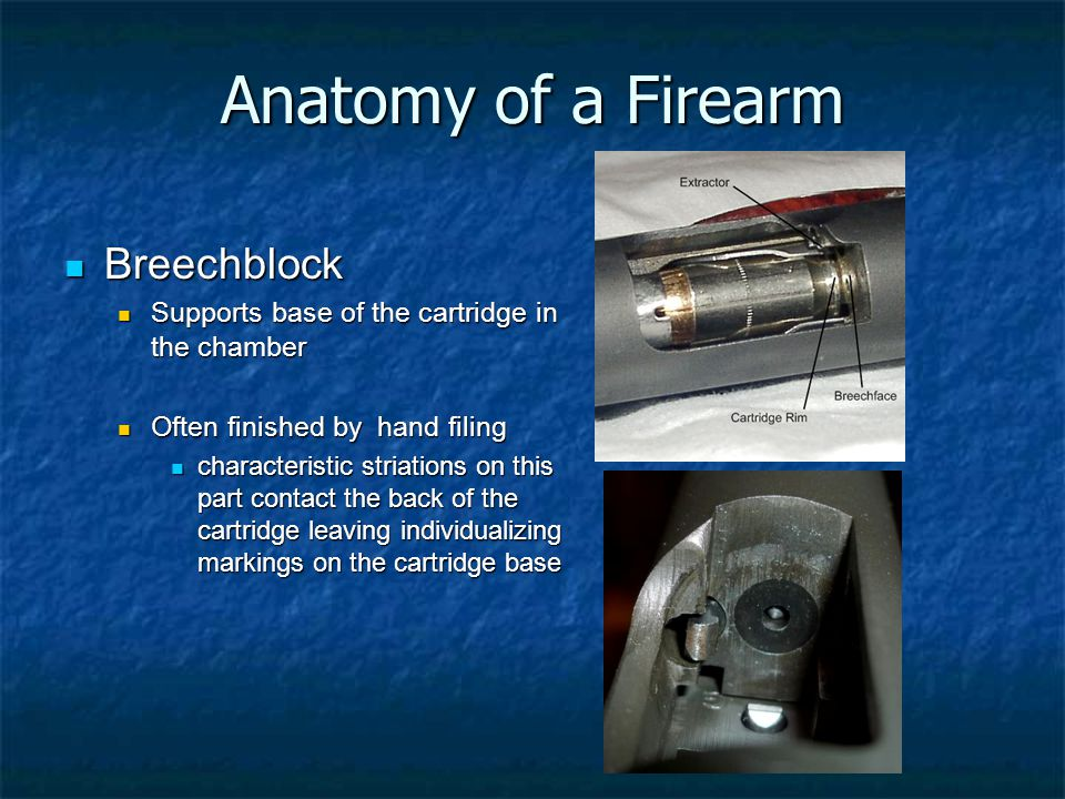 Anatomy of a Firearm Breechblock Breechblock Supports base of the cartridge in the chamber Supports base of the cartridge in the chamber Often finishe