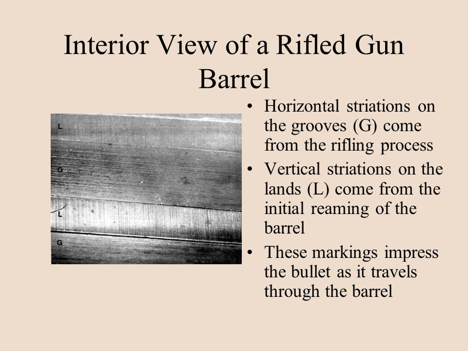 Interior View of a Rifled Gun Barrel Horizontal striations on the grooves (G) come from the rifling process Vertical striations on the lands (L) come