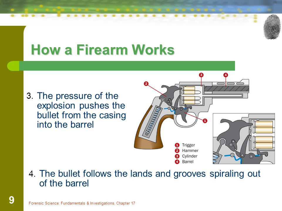 Forensic Science: Fundamentals & Investigations, Chapter 17 9 How a Firearm Works 4. The bullet follows the lands and grooves spiraling out of the bar