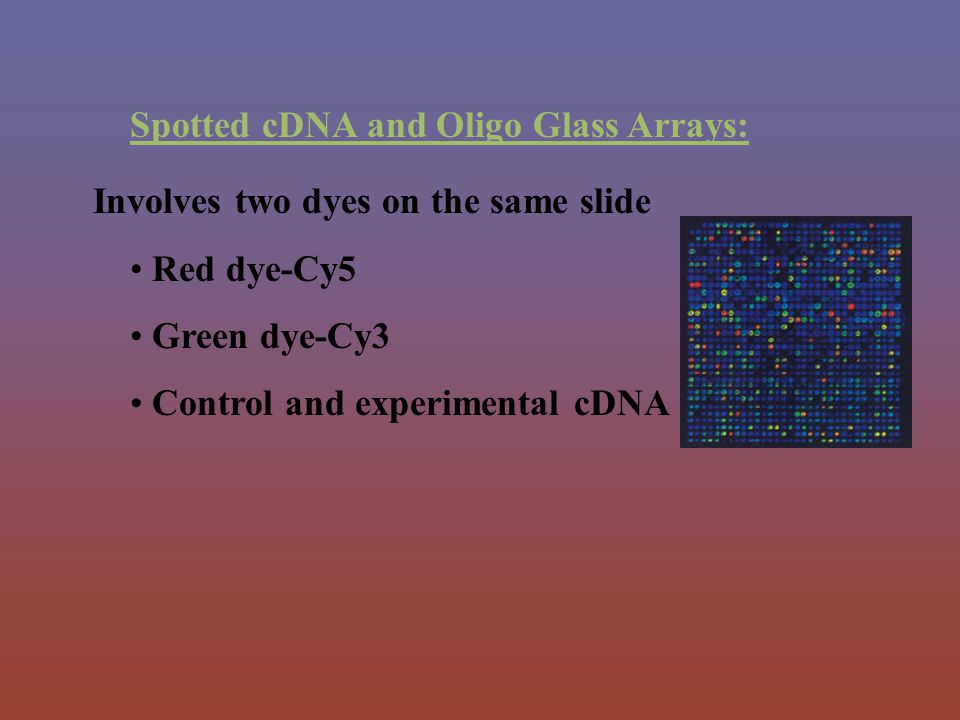 Spotted cDNA and Oligo Glass Arrays: Involves two dyes on the same slide Red dye-Cy5 Green dye-Cy3 Control and experimental cDNA on same chip