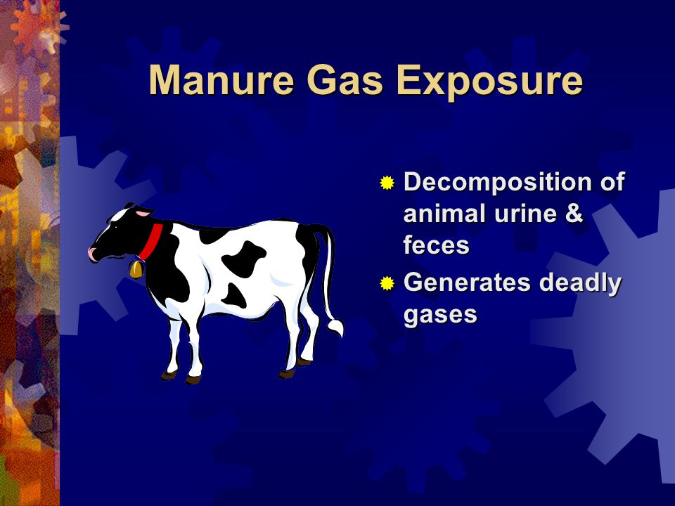 Manure Gas Exposure Decomposition of animal urine & feces Decomposition of animal urine & feces Generates deadly gases Generates deadly gases