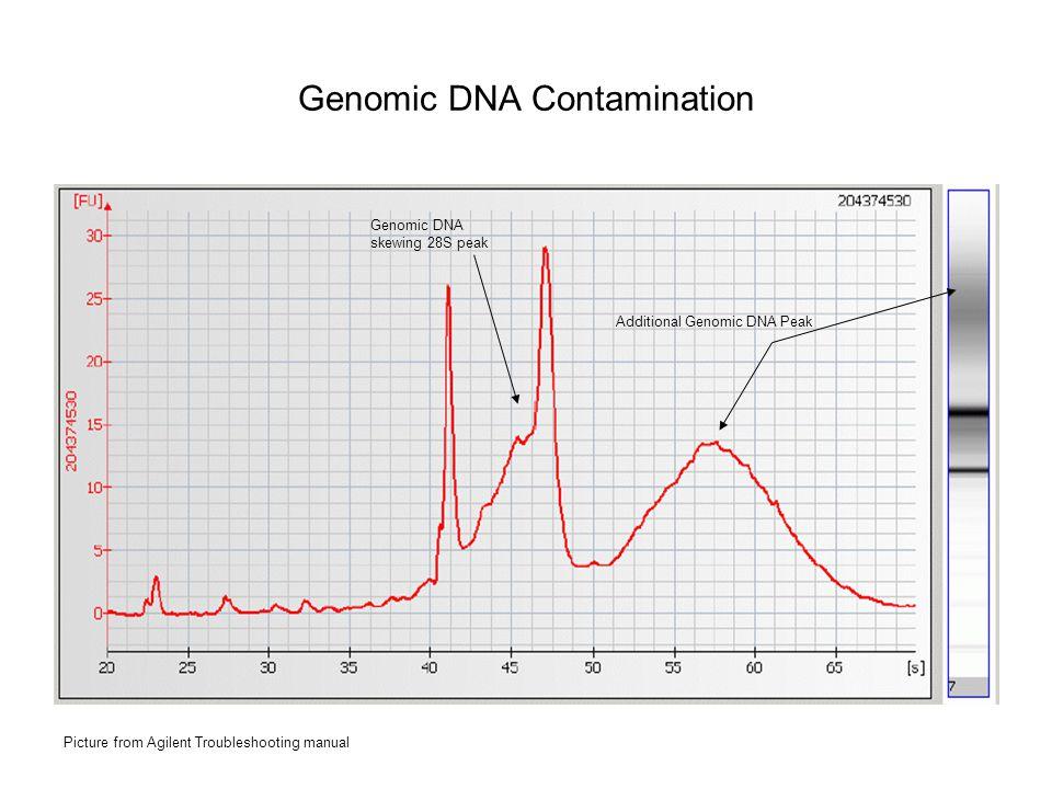 Genomic DNA Contamination Additional Genomic DNA Peak Genomic DNA skewing 28S peak Picture from Agilent Troubleshooting manual