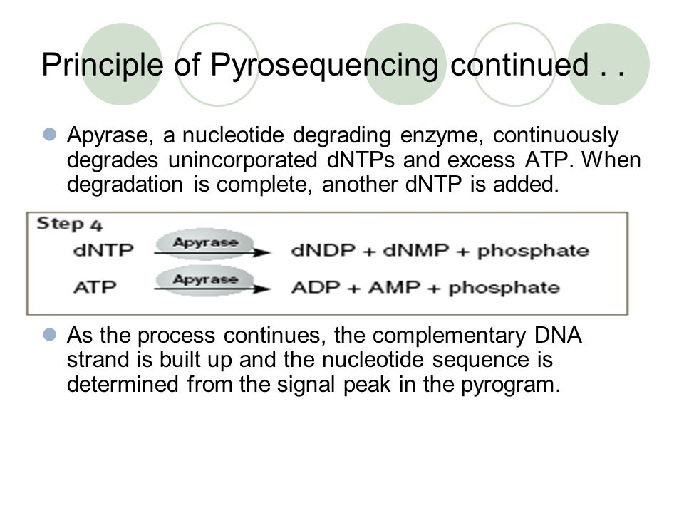 Principle of Pyrosequencing continued.. Apyrase, a nucleotide degrading enzyme, continuously degrades unincorporated dNTPs and excess ATP. When degrad