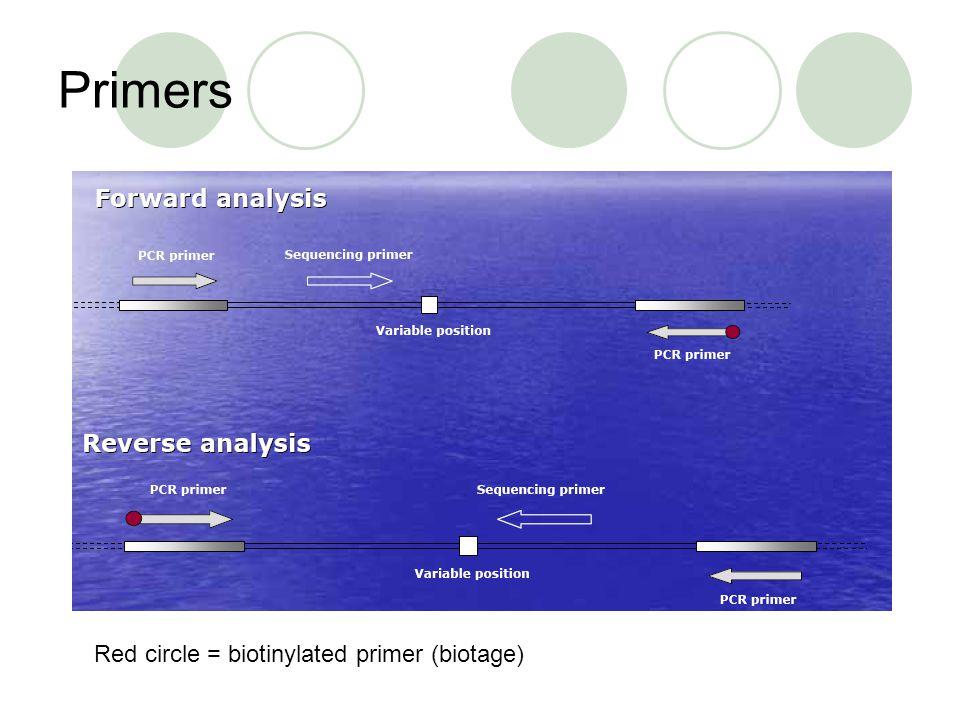 Primers Red circle = biotinylated primer (biotage)
