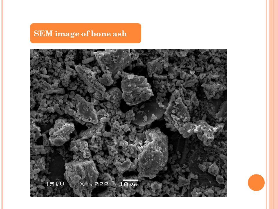 SEM image of bone ash