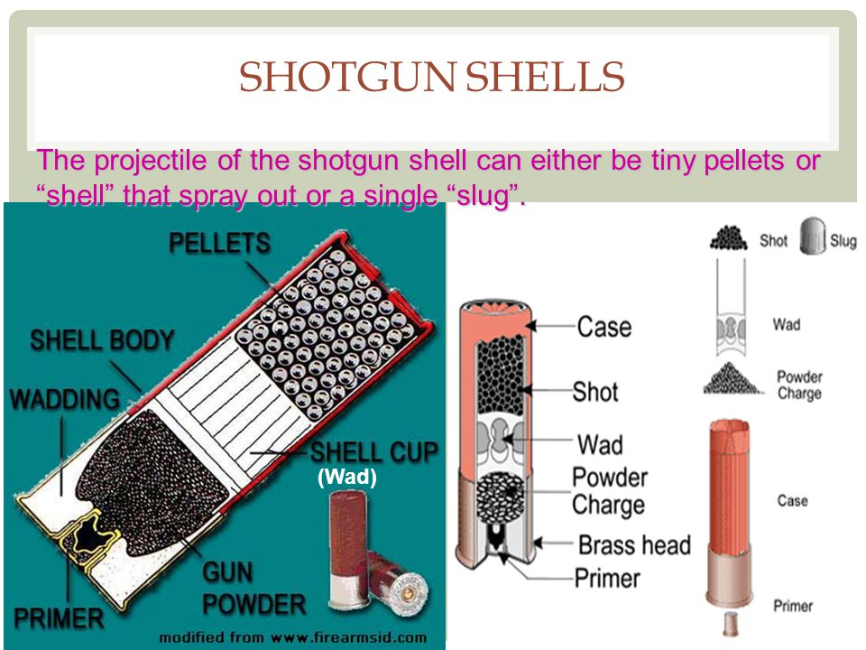 SHOTGUN SHELLS The projectile of the shotgun shell can either be tiny pellets or shell that spray out or a single slug. (Wad)