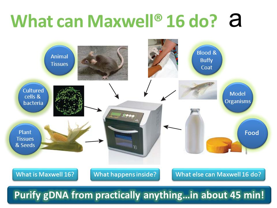 a What happens inside? What is Maxwell 16? What else can Maxwell 16 do? Plant Tissues & Seeds Plant Tissues & Seeds Cultured cells & bacteria What can