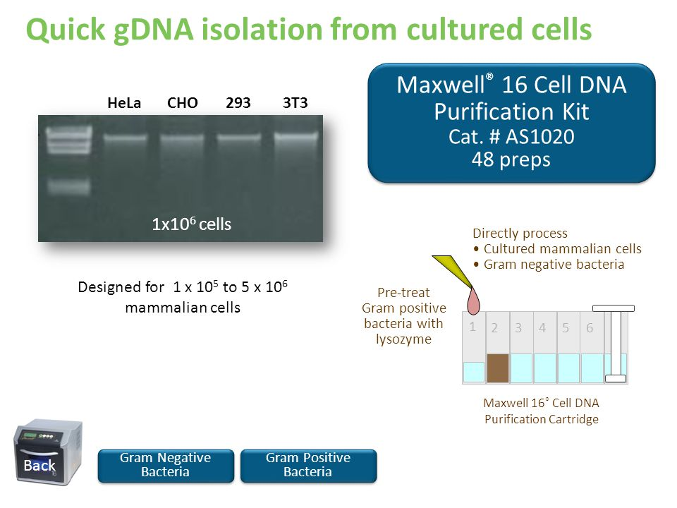 Quick gDNA isolation from cultured cells Maxwell ® 16 Cell DNA Purification Kit Cat. # AS1020 48 preps Maxwell ® 16 Cell DNA Purification Kit Cat. # A