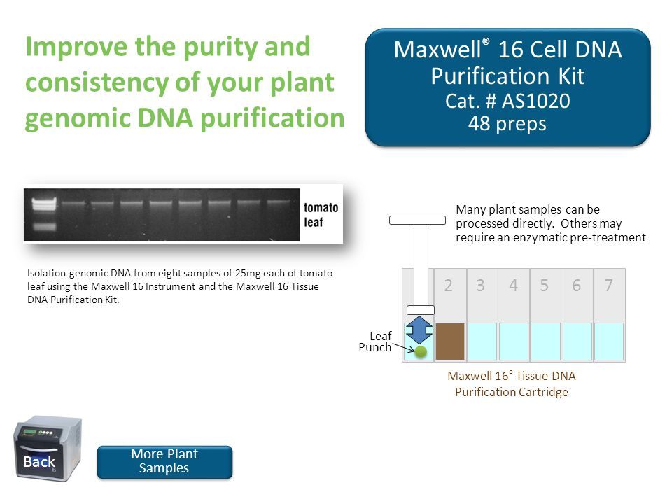 Maxwell ® 16 Cell DNA Purification Kit Cat. # AS1020 48 preps Maxwell ® 16 Cell DNA Purification Kit Cat. # AS1020 48 preps More Plant Samples More Pl