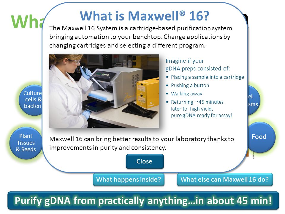 a What is Maxwell 16.What else can Maxwell 16 do.
