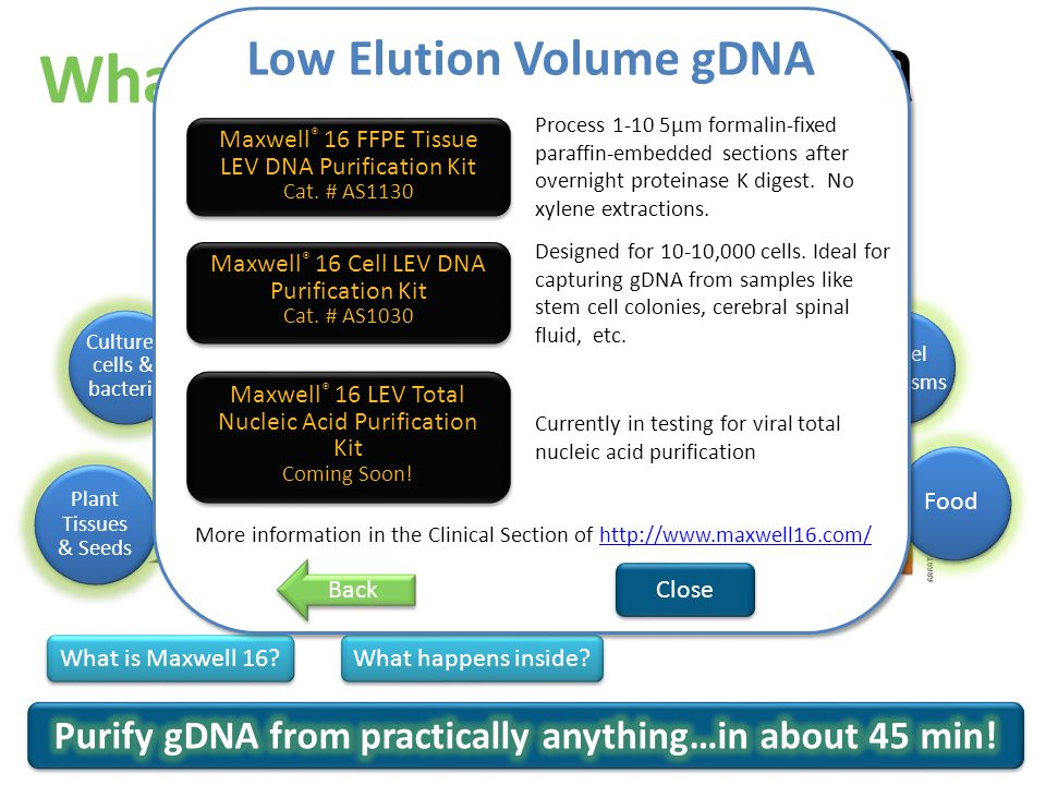 Quick gDNA isolation from cultured cells Maxwell ® 16 Cell DNA Purification Kit Cat.