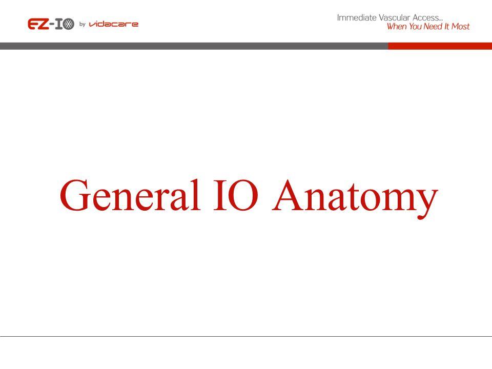 General IO Anatomy