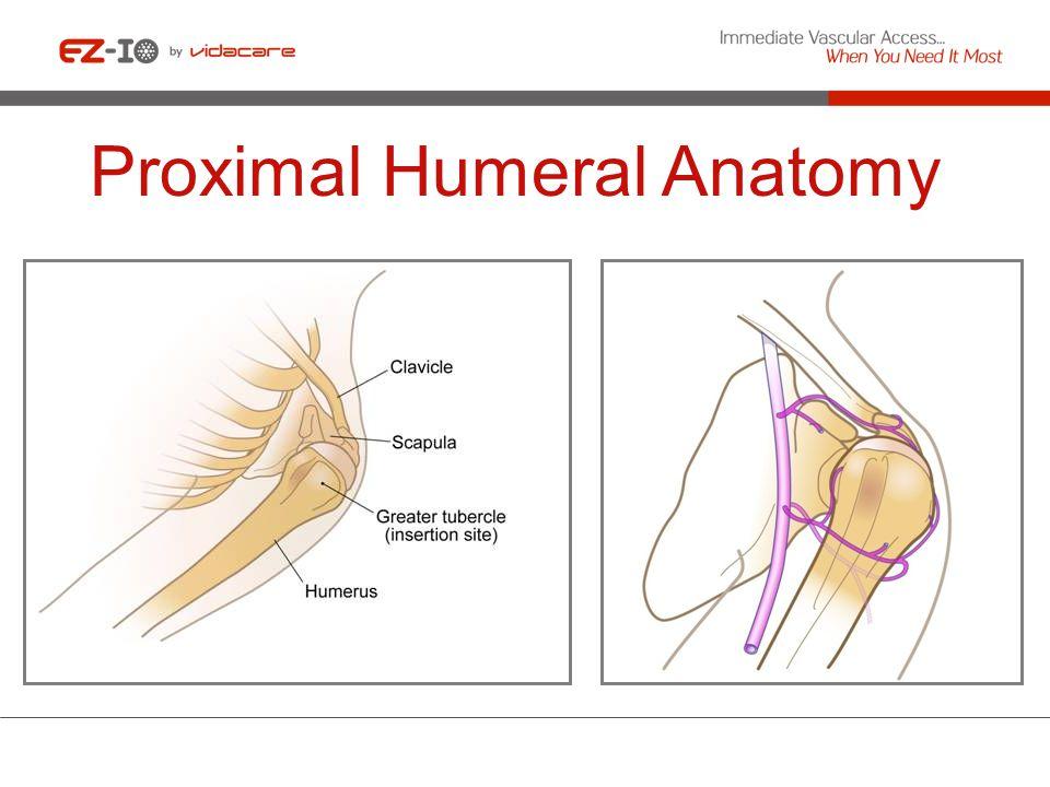 Proximal Humeral Anatomy