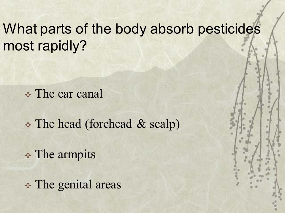 What parts of the body absorb pesticides most rapidly.