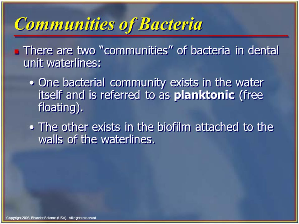 Copyright 2003, Elsevier Science (USA). All rights reserved. Communities of Bacteria n There are two communities of bacteria in dental unit waterlines