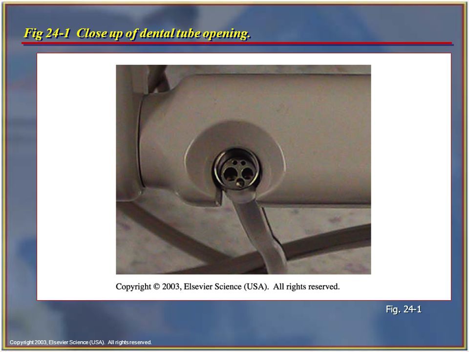 Copyright 2003, Elsevier Science (USA). All rights reserved. Fig 24-1 Close up of dental tube opening. Fig. 24-1