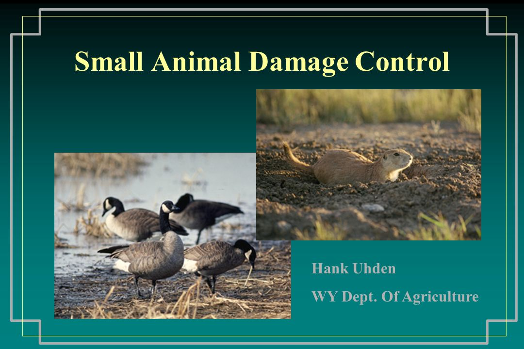 Small Animal Damage Control Bats Insectivorous Not aggressive, but will bite if handled Health risk: rabies & encephalitis Control: Exclusion (permanent solution) Ultrasonic devices - not effective, some attract bats Naphthalene Flakes (Moth balls) Toxicants - NONE