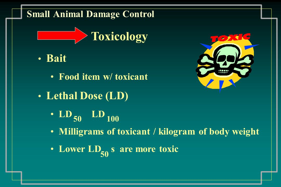 Small Animal Damage Control Hantavirus Deer mouse is primary carrier Transmitted by: Direct contact with mice Inhaling airborne particles No known person to person transmission Infection in cats is rare Similar virus to hemorrhagic fever - no known cure