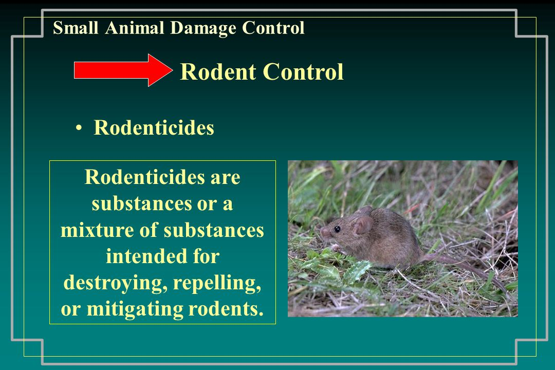 Small Animal Damage Control Baiting Zinc Phosphide requires pre-baiting Prairie Dogs Best when green forage is not available Use one (1) teaspoon of bait/burrow Fumigants Clean-up following bait applications