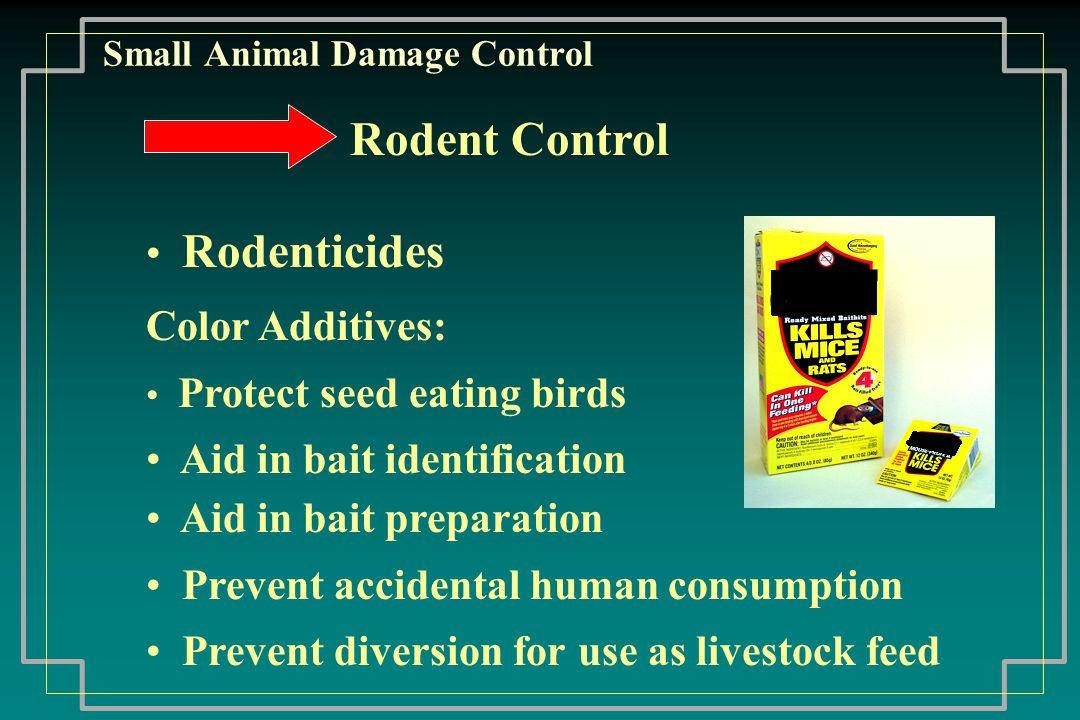 Small Animal Damage Control Plague Human contact plague in 3 ways: Flea bite Unprotected contact Airborne particles Flea associated with human plague does not exist in Wyoming Rodent flea though will feed on humans if the opportunity arises
