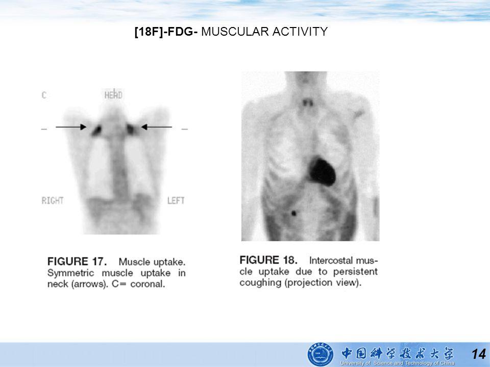 14 [18F]-FDG- MUSCULAR ACTIVITY