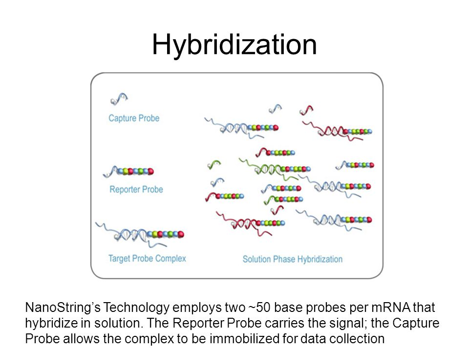 NanoStrings Technology employs two ~50 base probes per mRNA that hybridize in solution.