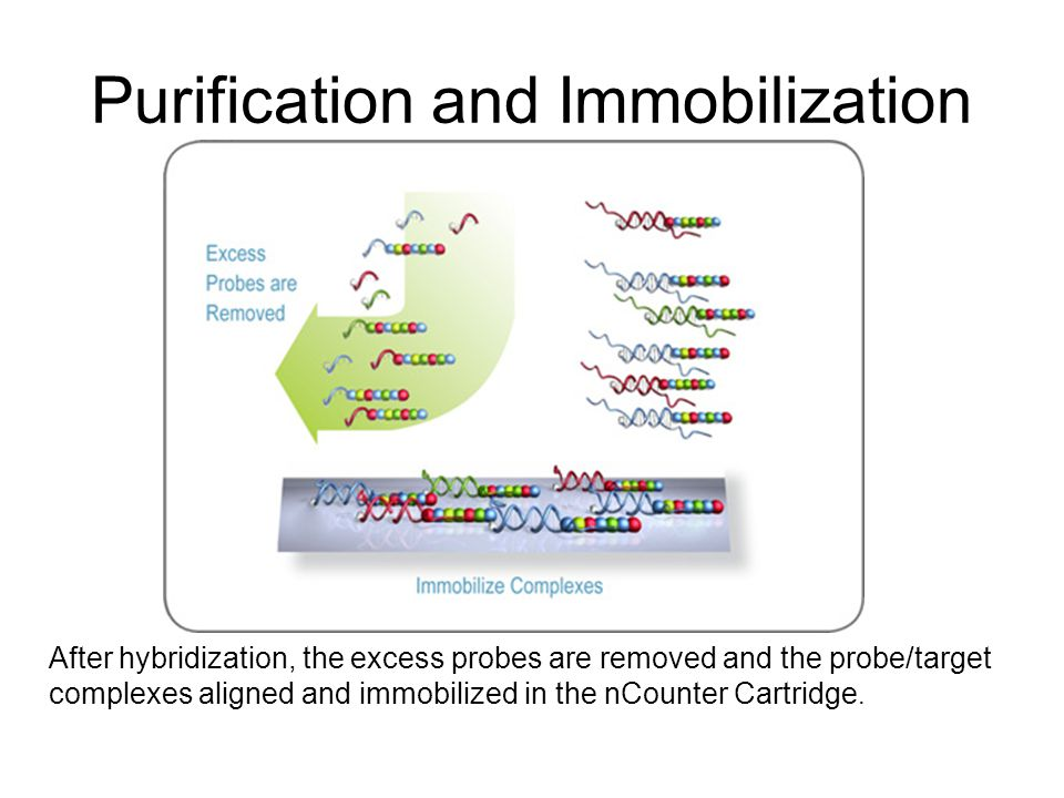 After hybridization, the excess probes are removed and the probe/target complexes aligned and immobilized in the nCounter Cartridge.