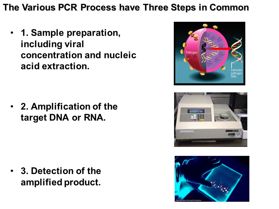 1.Sample preparation, including viral concentration and nucleic acid extraction.