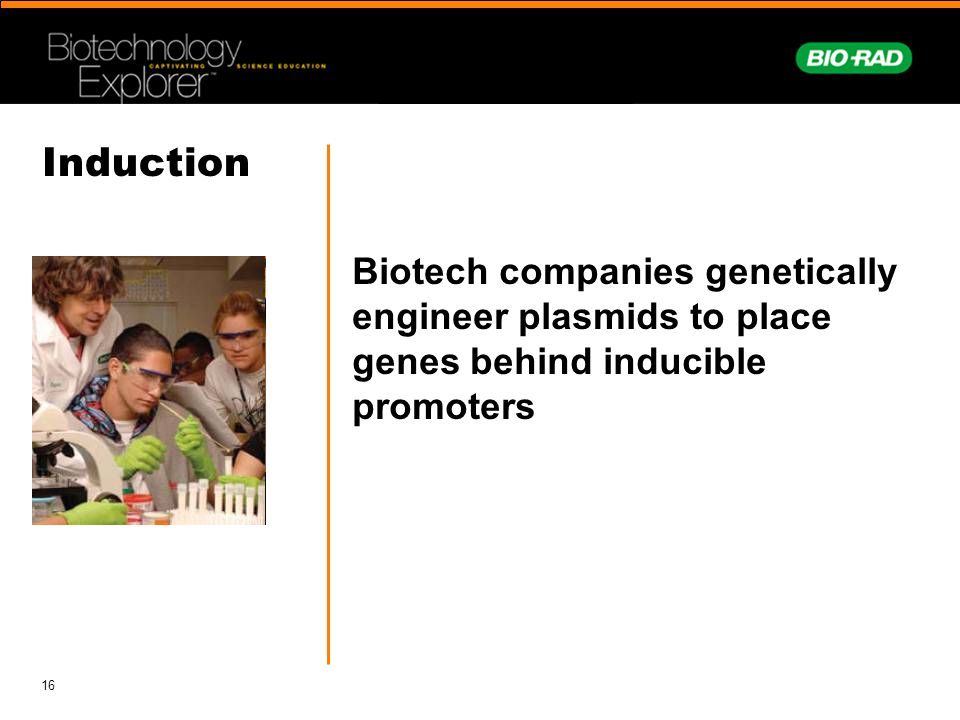 16 Induction Biotech companies genetically engineer plasmids to place genes behind inducible promoters