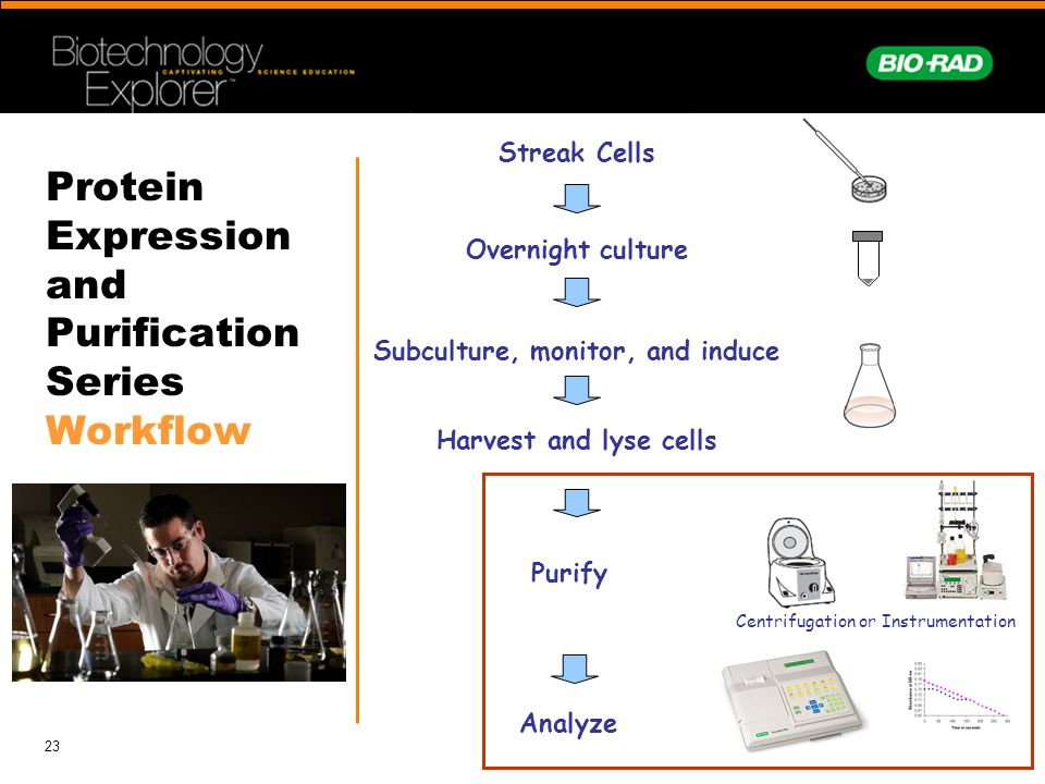 23 Protein Expression and Purification Series Workflow Streak Cells Overnight culture Subculture, monitor, and induce Harvest and lyse cells Purify Ce