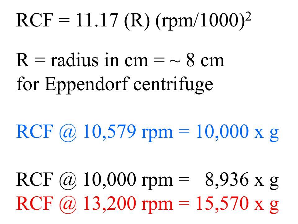 RCF = 11.17 (R) (rpm/1000) 2 R = radius in cm = ~ 8 cm for Eppendorf centrifuge RCF @ 10,579 rpm = 10,000 x g RCF @ 10,000 rpm = 8,936 x g RCF @ 13,200 rpm = 15,570 x g