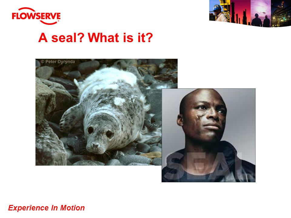 Experience In Motion A seal? What is it?