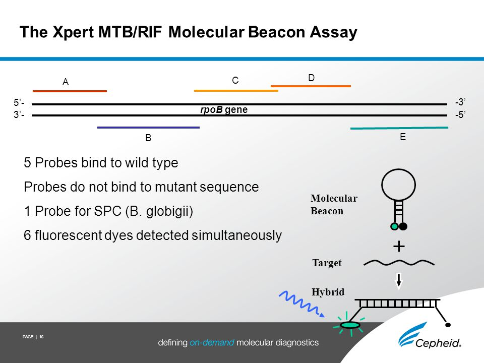PAGE | 16 Molecular Beacon Target Hybrid The Xpert MTB/RIF Molecular Beacon Assay 5 Probes bind to wild type Probes do not bind to mutant sequence 1 P