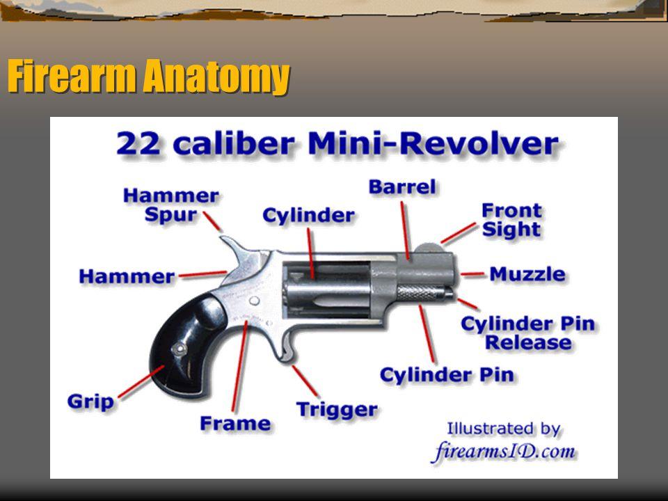 Firearm Anatomy