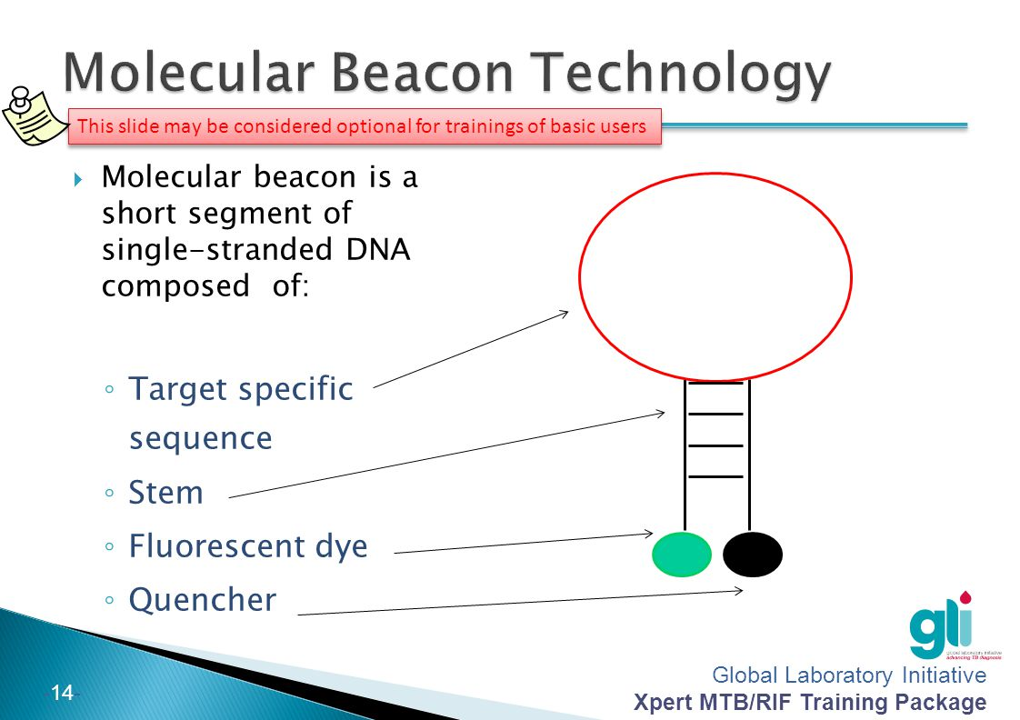 Global Laboratory Initiative Xpert MTB/RIF Training Package -14- This slide may be considered optional for trainings of basic users Molecular beacon i