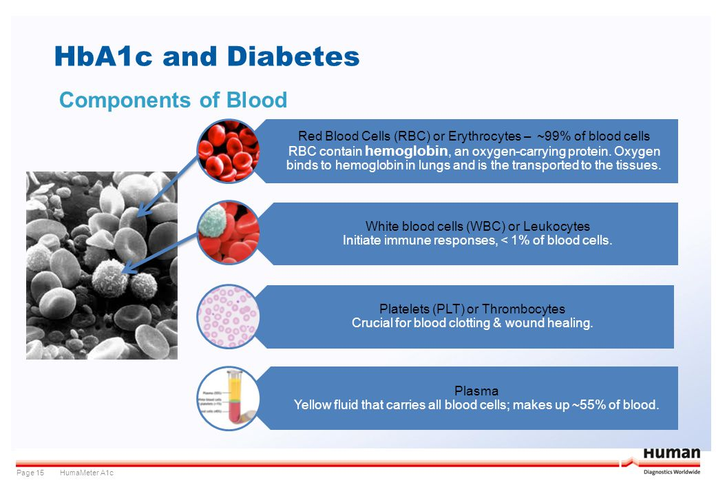 HumaMeter A1cPage 15 HbA1c and Diabetes Components of Blood Red Blood Cells (RBC) or Erythrocytes – ~99% of blood cells RBC contain hemoglobin, an oxy
