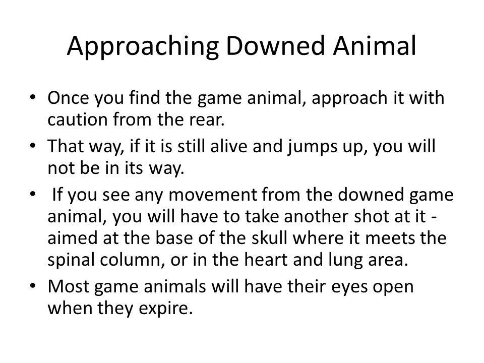 Approaching Downed Animal Once you find the game animal, approach it with caution from the rear. That way, if it is still alive and jumps up, you will