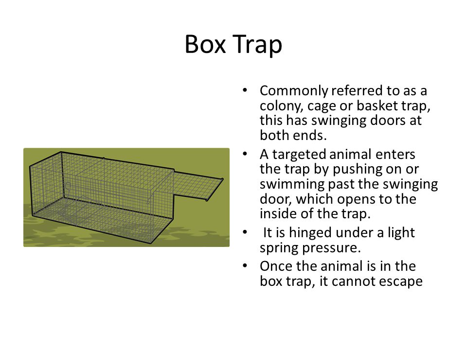 Box Trap Commonly referred to as a colony, cage or basket trap, this has swinging doors at both ends. A targeted animal enters the trap by pushing on